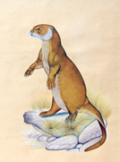 Extraordinary Signed S. Kumar Painting Of Otter