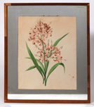 Early Botanical Watercolor